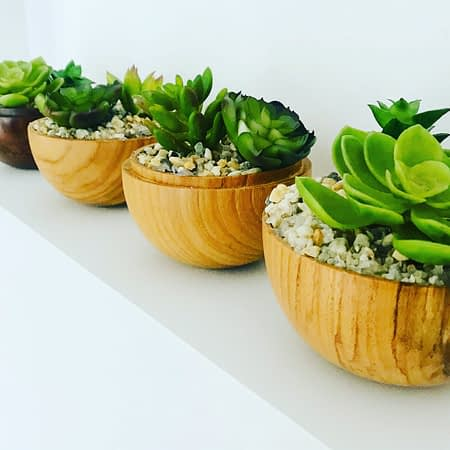 Potted Succulent in Wooden Holder