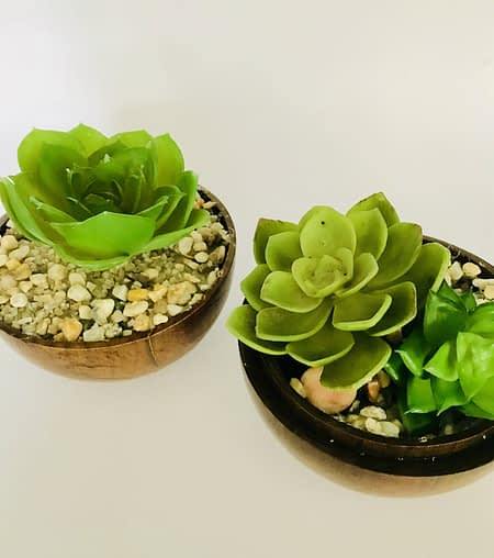 Potted fake Succulent in Wooden Holder